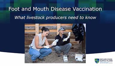 an introduction to the foot and mouth disease fmd