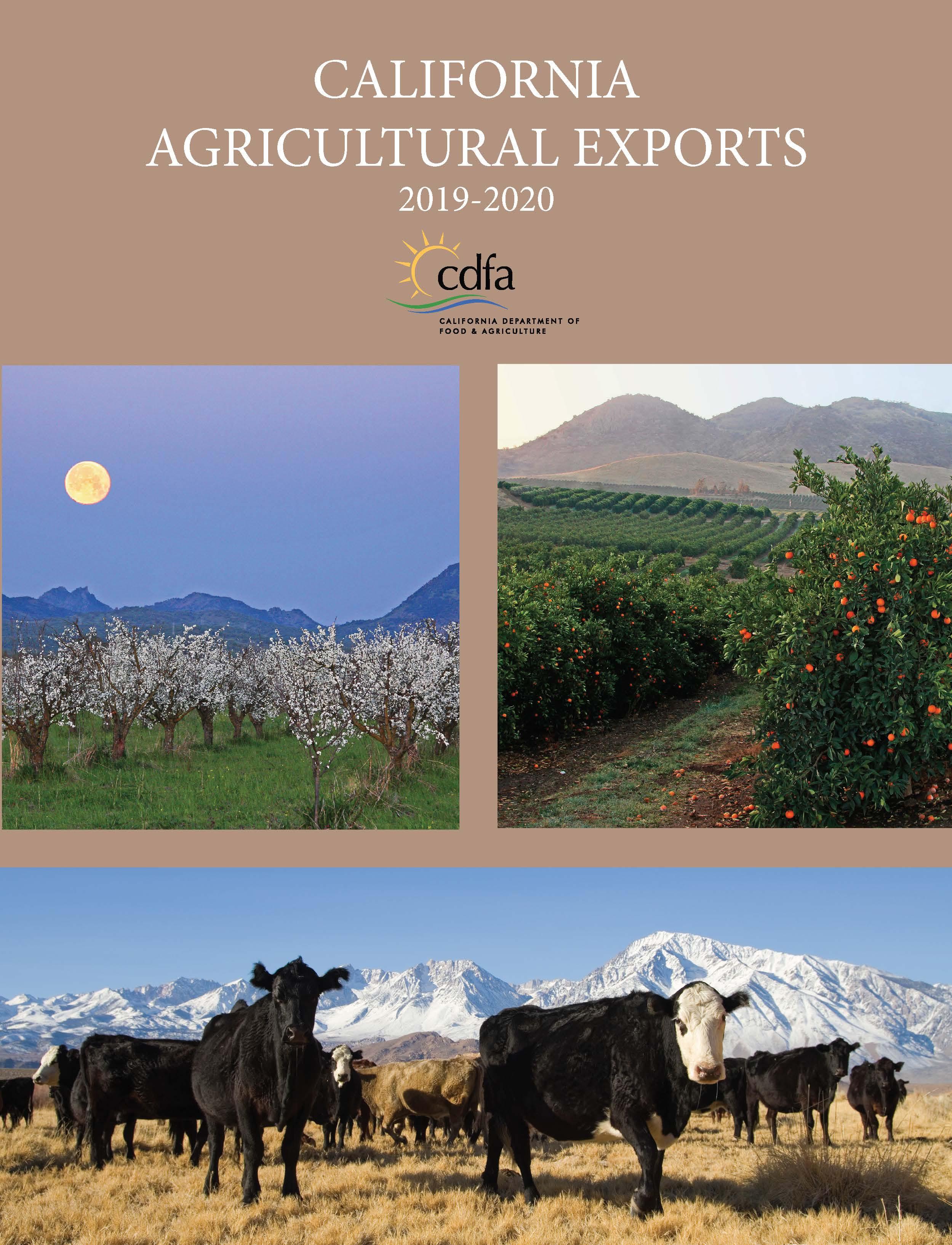 2020 Exports Publication Report