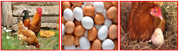 Egg Safety and Quality Management Program