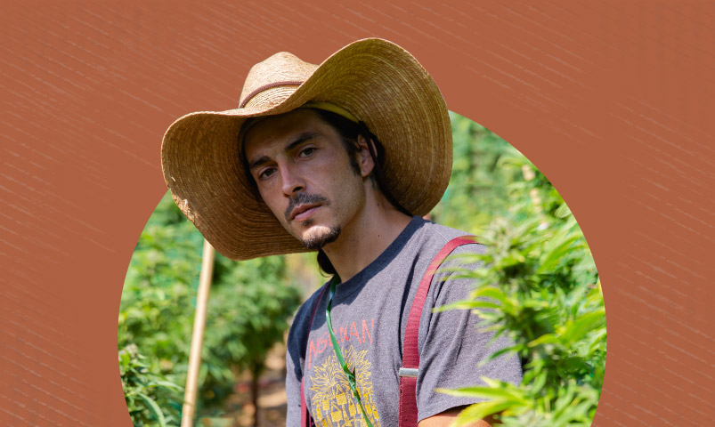 A grower in a cannabis field