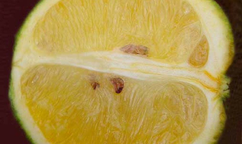 Damaged citrus
