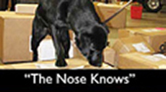 The Nose Knows