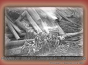 Humboldt County:Logging in the Redwoods