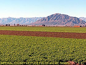 Imperial County: Leyyuce Fields