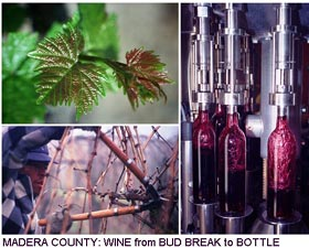 Madera County:Wine from bud break to bottle