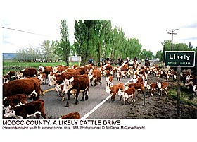 Modoc County: A likely Cattle Drive