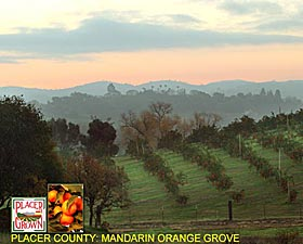 Placer County: Orange Grove