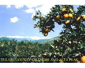Tulare County: Oranges