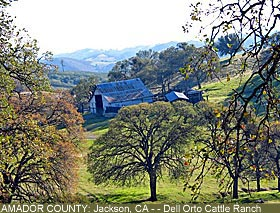 Amador County : Cattle Ranch