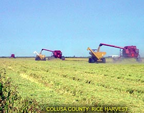Colusa County:Rice Harvest