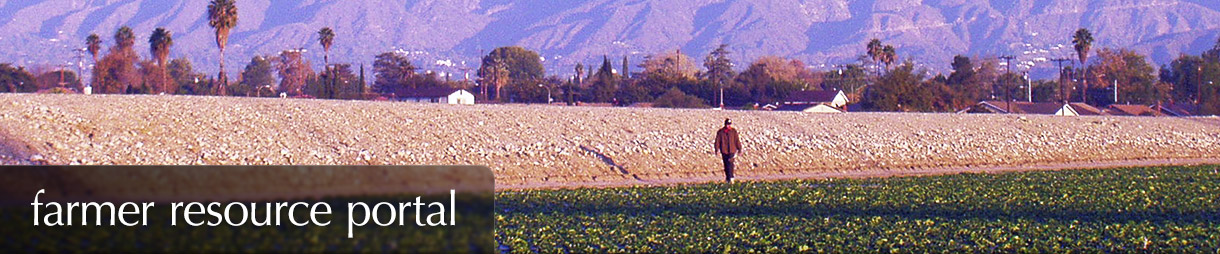 Farmer Resource Portal - A farmer looks over his LA County strawberry field
