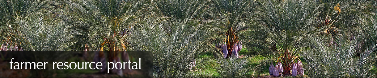 Farmer Resource Portal - A grove of date palms