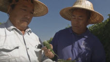Tchieng and Thao Farms video thumbnail