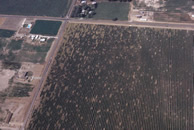 Aerial of vineyard with PD