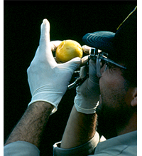Pest Program Home Page image
