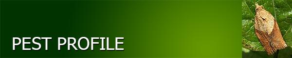 Light Brown Apple Moth Pest Profile Banner