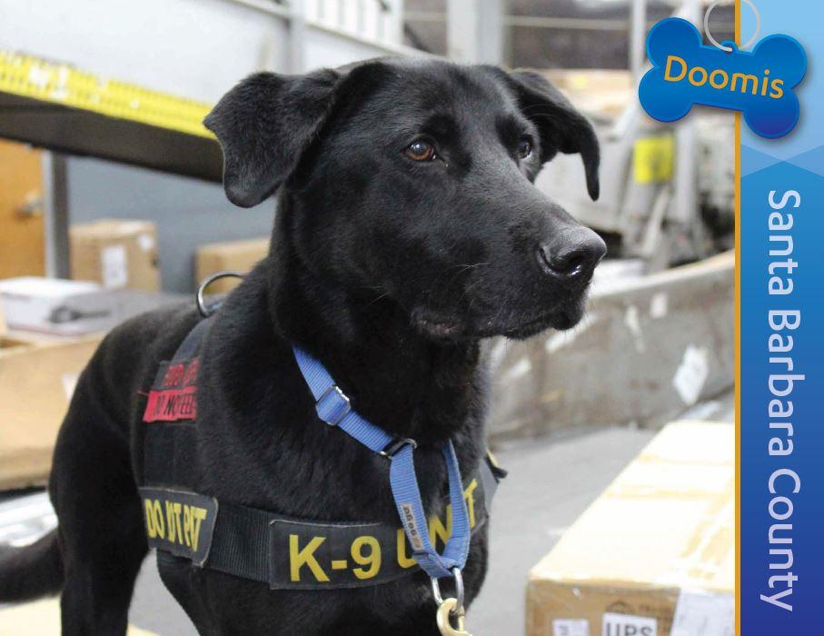 Detector Dog Doomis, Santa Barbara County
