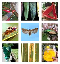 Pest Program Home Page image
