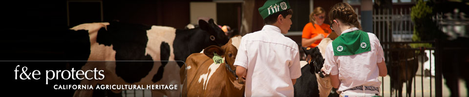 Fairs & Expositions protects California Agricultural Heritage - Cow Show