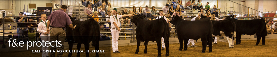 Fairs & Expositions protects California Agricultural Heritage - Cattle Show