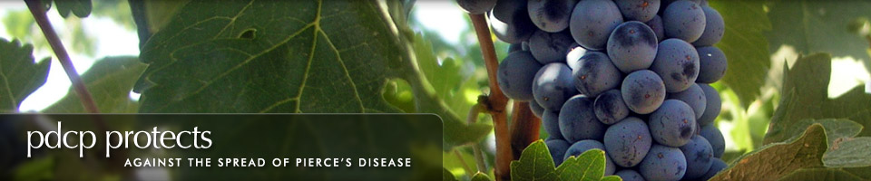 Banner 3: PDCP protects against the spread of Pierce's Disease